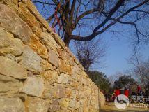 古树下的石墙