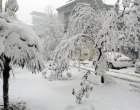 《雪压枝头》