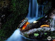 ---秋日溪水