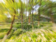 变焦摄影 小树林