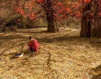 环境人像——柿子红满天(3)