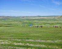 美丽的的草原!32