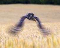 学拍慢门——乌林鸮