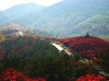 满山红叶似彩霞(6幅)