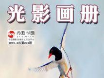 """每周一星 """"文武""""(董家斌)摄影作品展(电子画册第239期)"""