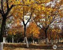 北京金秋——绚丽多彩之北宫国家森林公园(26)