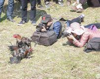 战  、 斗  、  鸡