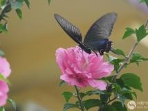 14年第7期夏花月赛———木荆蝴蝶