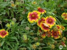 ☆165的花卉随拍