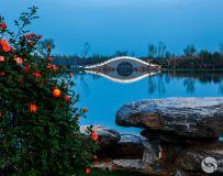 月季大观园风景美如画
