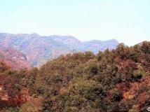十月月赛-------------------秋到伏牛