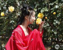 月季花开 飘香五洲