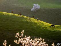 """""""徒步""""杯摄影月赛四月—《春的脚步》作者:田国建"""