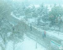 雪天的校园一角