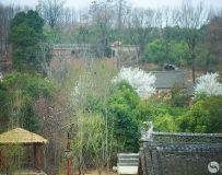 石头村的春天