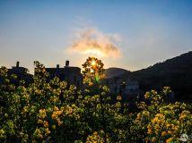 """""""徒步""""杯摄影月赛四月—《油菜花与太阳》作者:风"""