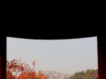 """""""黄岗红叶""""摄影大赛--- 怒放的生命(组) 6p"""