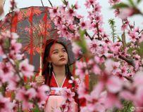 人面桃花相映红