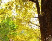 赏   秋