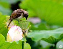 鸟语花香满荷塘