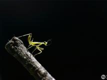 【14年第4期月赛】小小螳螂