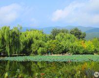 中秋植物园6