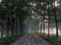 晨光透过林荫道