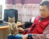 办公室的小猫