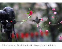 百花潭的小鸟也有好奇心