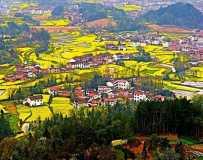 最美人间四月天……陕西汉中油菜花