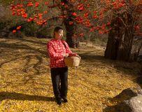 环境人像——柿子红满天(8)