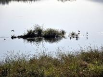 """灌河湿地.4""""鸟的家园"""""""
