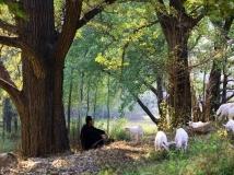 牧羊曲(摄于乔端后湖村)