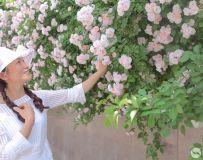 蔷薇花开(1)