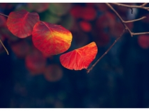 红叶谷的色彩