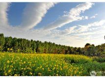 叶伴翠纹绿云伴黄花香