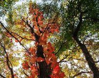《十月五彩色》