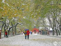 """12月 月赛 """"冬季风情"""" 雪中行。"""