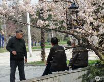 春叙......