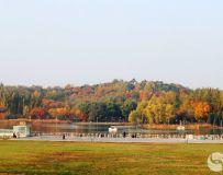 金秋北京奥森公园 红枫银杏彩叶飘飘(66)