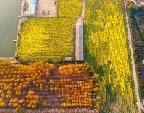 黄叶飘落的时节