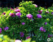春色满园(3)