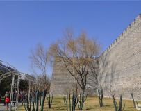 北京明城墙遗址公园随拍之十七