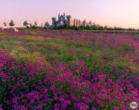 花海里的城堡