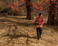环境人像——柿子红满天(6)