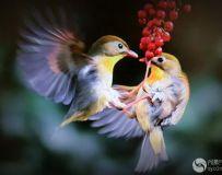 鸟儿【2】