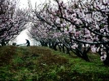 【13年第3期月赛】《桃花园里可耕田》