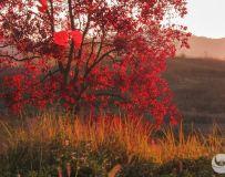 枫叶红了的时候
