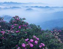 光影中国网2018年第4期月赛《花卉 》评选结果公布