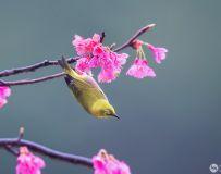 花鸟拜晚年